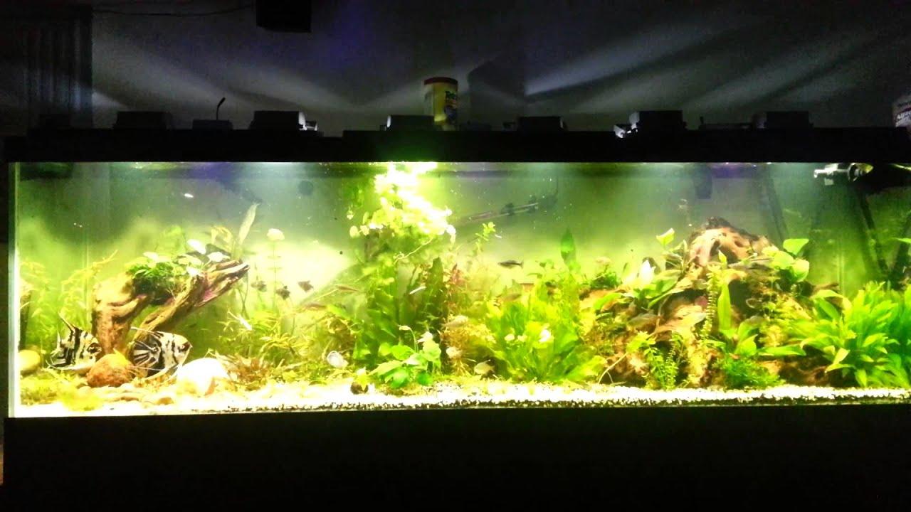 125 gallon aquarium with led floodlights & 125 gallon aquarium with led floodlights - YouTube azcodes.com