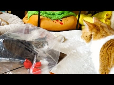 猫アタック失敗 – Cat Attack Fail –