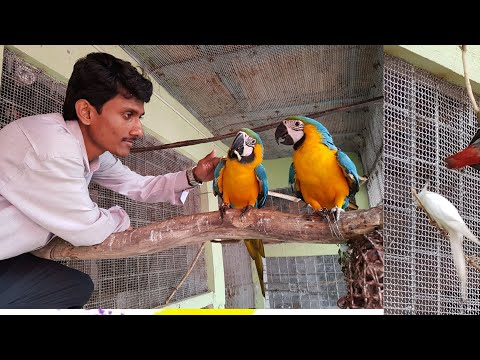 Live Parrot Dipankar Exotic Bird Breeding Farm Displaying.