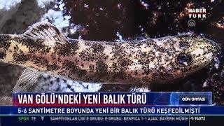 Van Gölü'ndeki yeni balık türü
