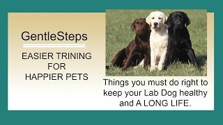 How To Easily Potty Train Your New Labrador Retriever Puppy | Avoiding Housetraining Accidents