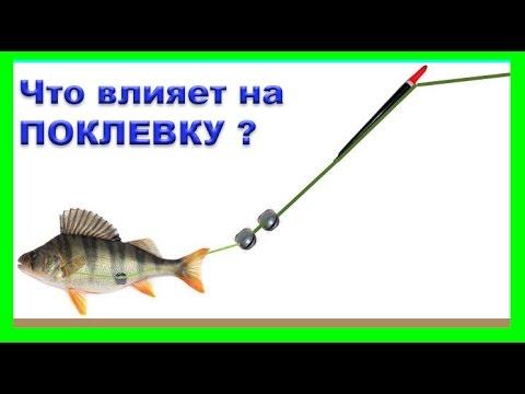 размышление о ПОКЛЕВКАХ. Что влияет на поклевки ? Поплавочная удочка. Рыбалка.Fisfing