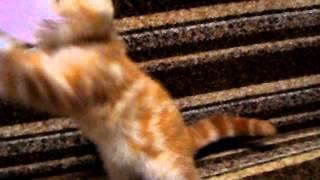 Фолд кошка 25 06 15