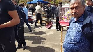Ташкентский птичий рынок. Канарейки.6.04.19