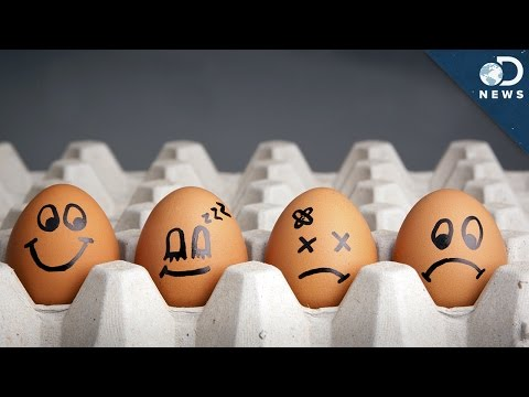 Are Eggs The Perfect Food?