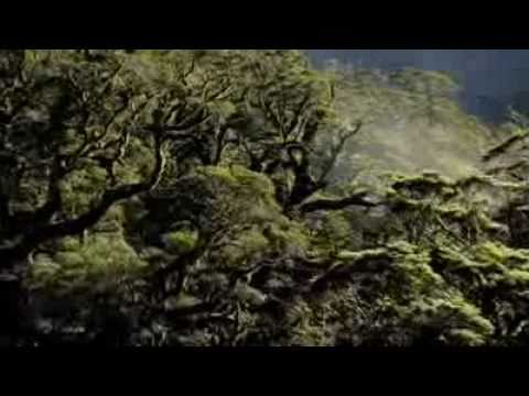 World Environment Day Videos   United Nations Environment Programme 2