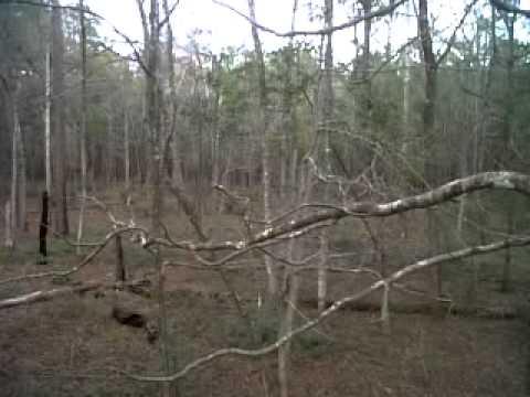 Sam Houston National Forest - Deer Hunting - Dec 29 2012