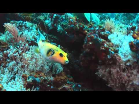 Наша Земля  Наши океаны - Видео онлайн