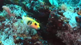 видео Океаны и моря Земли