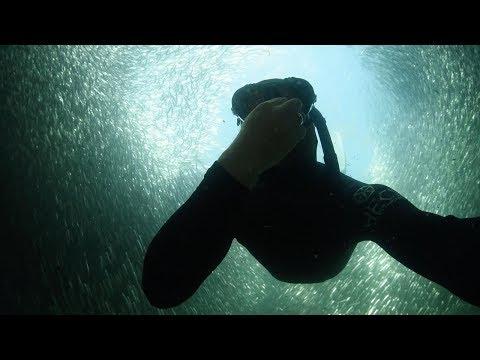 Diver Swims Through Bait Ball