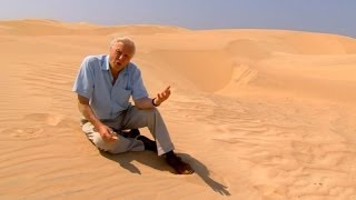 Why did the Elephant Bird disappear? | #AttenboroughWeek | Attenborough and the Giant Egg | BBC