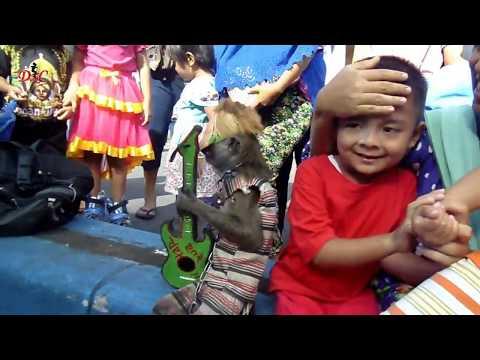 topeng-monyet-ngamen---atraksi-topeng-mooyet-!!!- -video-monkey-lucu