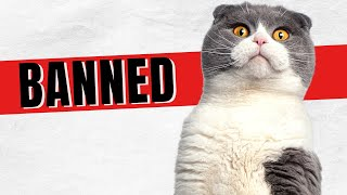 Should Scottish Fold Cats Be Banned? The Truth!