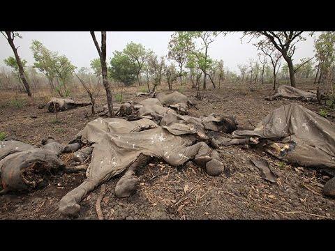 Wildlife Populations Plunging Worldwide