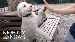 Having A Dog Can Help You Have A Healthy Heart, Study Finds | NBC Nightly News