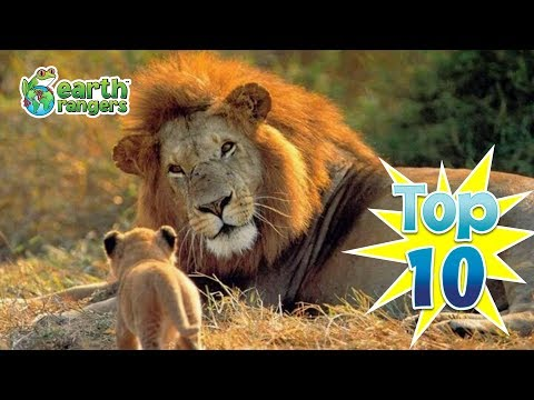 Top 10: Animal Fathers