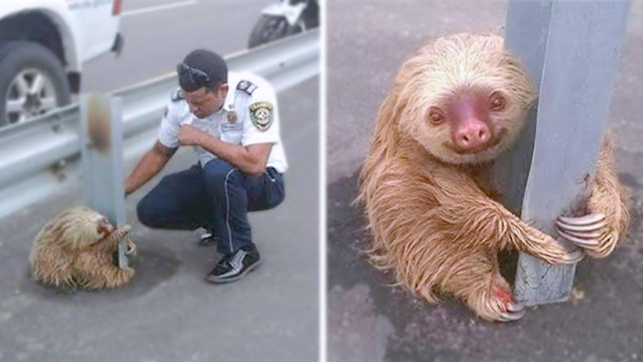 Top 10 Animales Que Fueron Rescatados Por Humanos