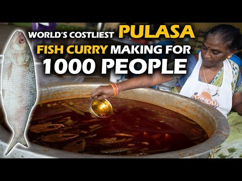 World's Costliest Pulasa Fish Curry Making For 1000 People #Ilish Fish Curry