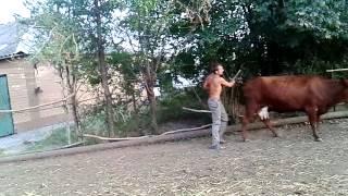 Как лишить корову вздутия / How to deprive a swelling cow(Как лишить корову вздутия группа ВКонтакте http://vk.com/club94802987., 2014-09-09T17:50:12.000Z)