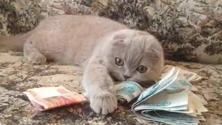 кошка не хочет отдавать деньги