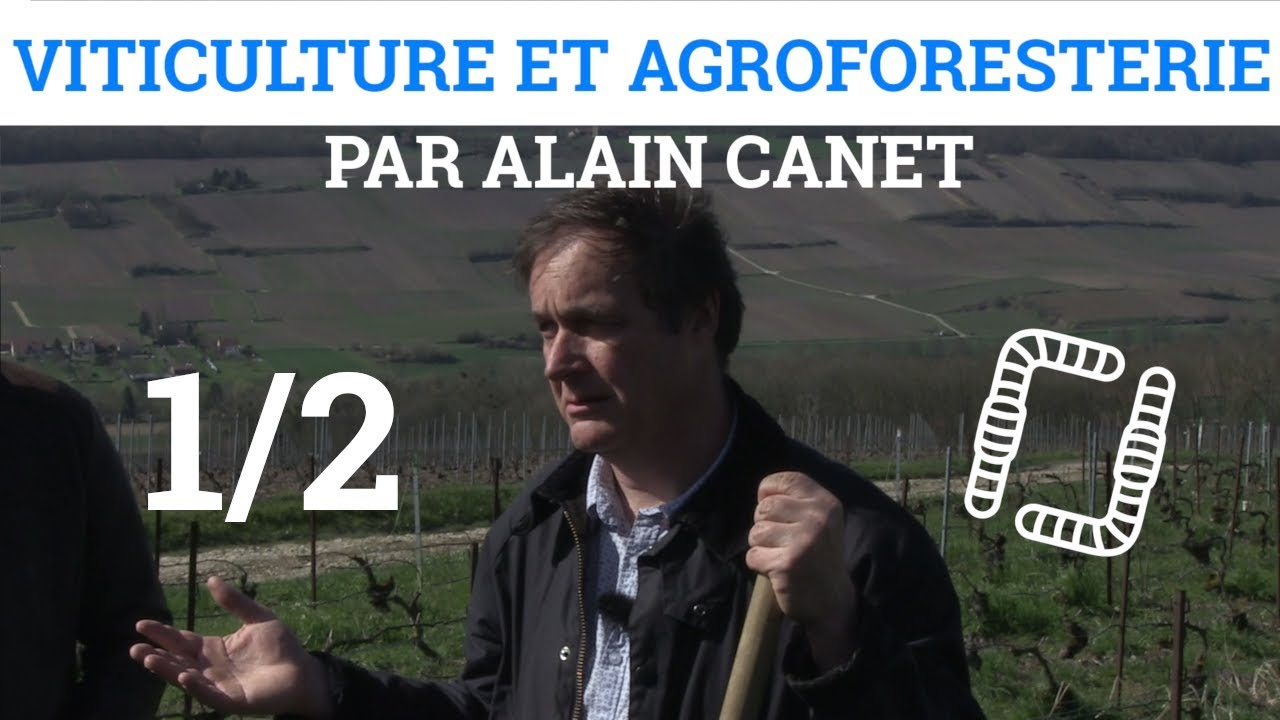 1/2 Viticulture et Agroforesterie - Alain CANET #1