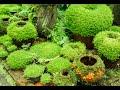 How to Grow Moss Garden Indoor - Moss Garden Indoor Tips