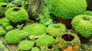 How to Grow Moss Garden Indoor