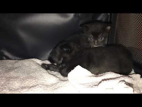 Cute silly kittens playing