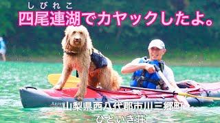 四尾連湖 [しびれこ]は、山梨県西八代群市川三郷町に位置する周囲約1.3k...