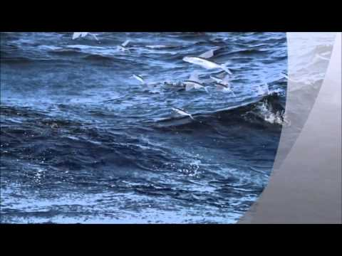 Flying fish  Slow Motion HD
