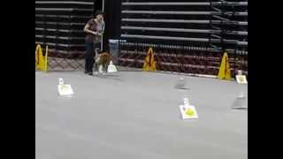 Akc Rally Obedience Novice A Class Boxer Huntington Wv
