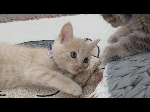 Kitten Close Up 2017-08-01