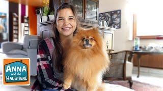 Pomeranian | Information für Kinder | Anna und die Haustiere
