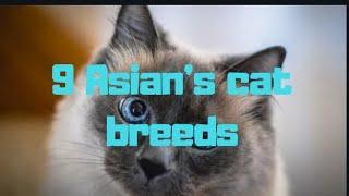 9 Asian's cat Breeds