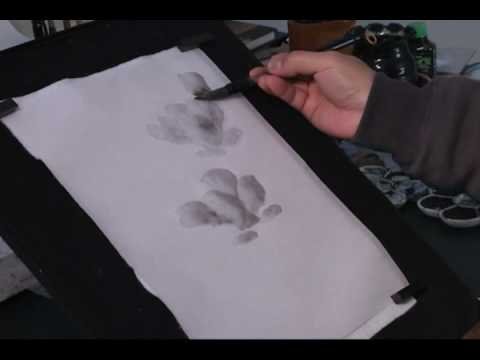 How to Paint Magnolia in Sumi Ink and Water Chinese Brush Painting