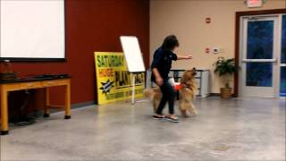 Dog Training For 4h Club In  Rockport, Tx - Kirsten W.corda,phd, Tx A & M Agrilfe Extension Agent