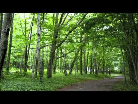 自然の音景色L 静かな森 (野鳥の鳴き声) ・ Nature Sound