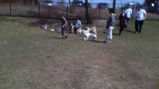 Brampton Dog Park