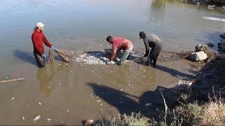 أخبار عربية - تقلص إنتاج السمك في سهل الغاب بسبب قصف النظام المتواصل