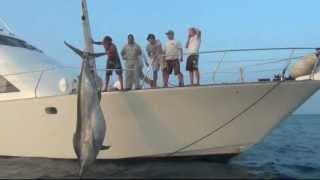 1038lb Black Marlin Caught, Nov 23 2011 - Little Audrey Game Fishing Charters.