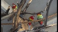Finishing the Aviary Warmer Weather New Birds!