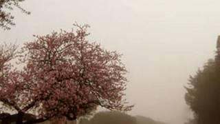 Felix Mendelssohn- Bartoldi canto di primavera.wmv