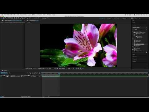 Crash Course: Flash, Photoshop and TV Paint
