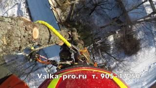Спил деревьев частями. Арбористы Valka-pro.ru 905-47-50