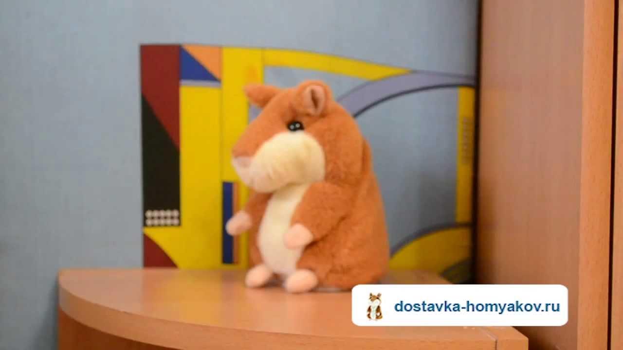 Говорящий хомяк поет Сплина! Купить говорящего хомяка: dostavka .