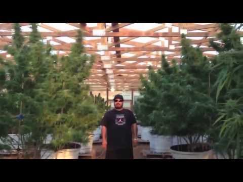 "OMMPgrower Motivational Marijuana #7- Face your Fear ""100 pound outdoor"""