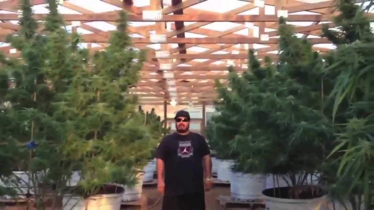 """OMMPgrower Motivational Marijuana #7- Face your Fear """"100 pound outdoor"""" -  YouTube"""