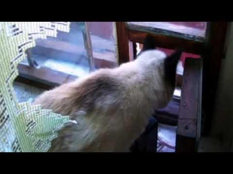 #Птицы-зимняя #кормушка.feeding trough for birds