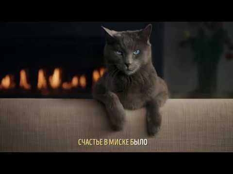 Реклама с котом который поет