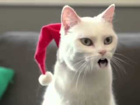 funny cat singing xmas songs